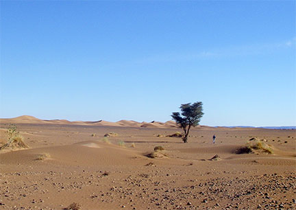 tree in Sahara